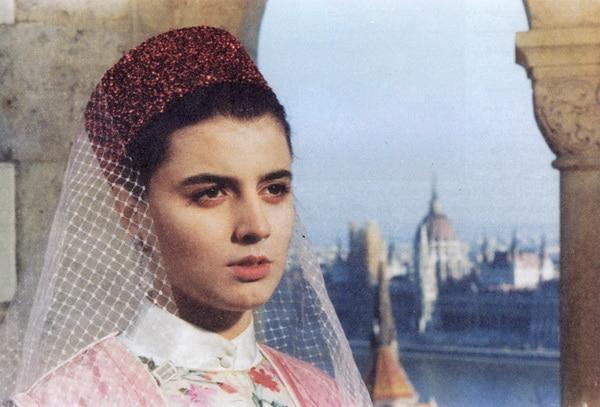 Photo of محمدرضا شجریان- رهزن اهل هنر